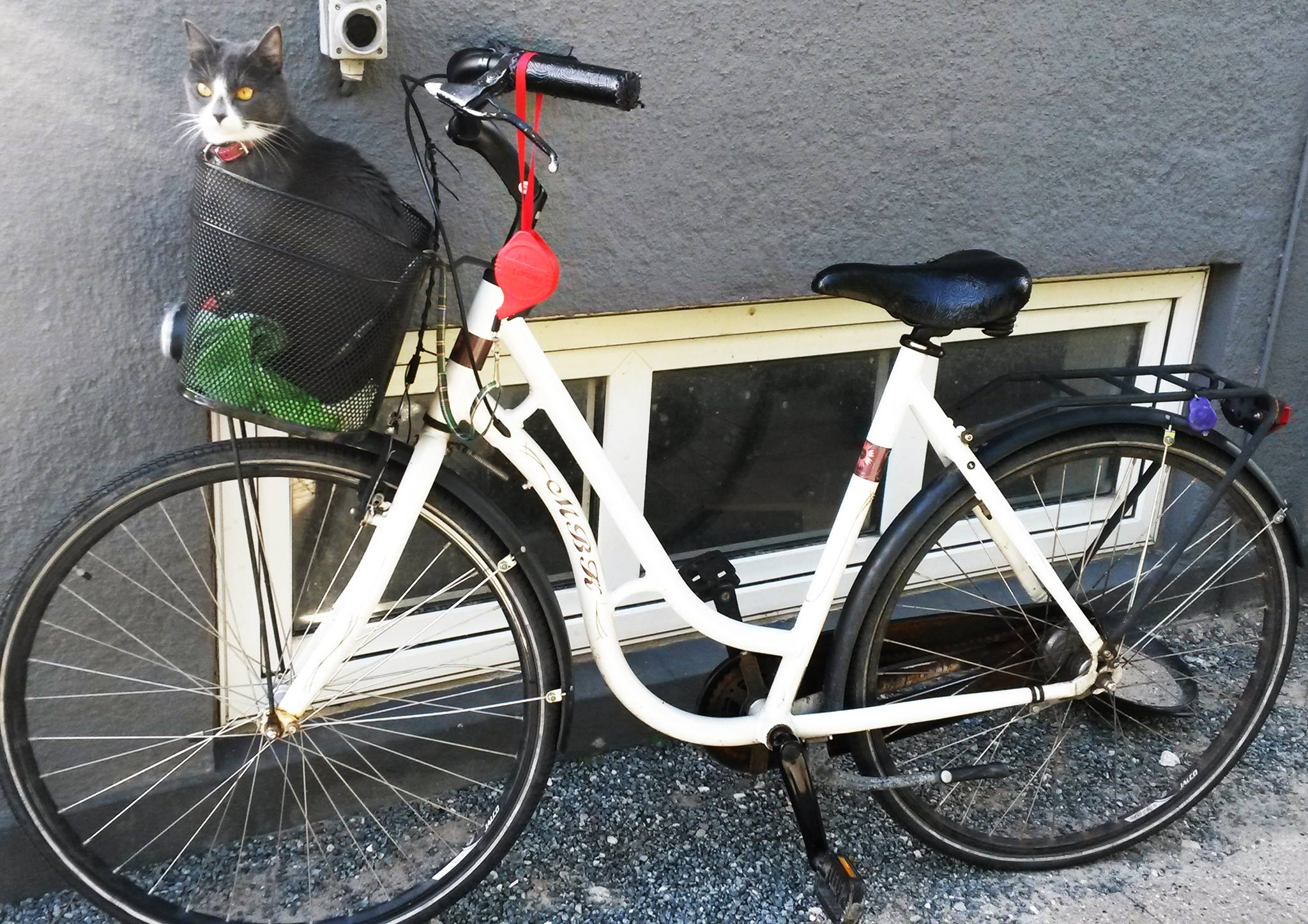 Ina Pura - Jurnal de calatorie din Danemarca pentru Timisoara